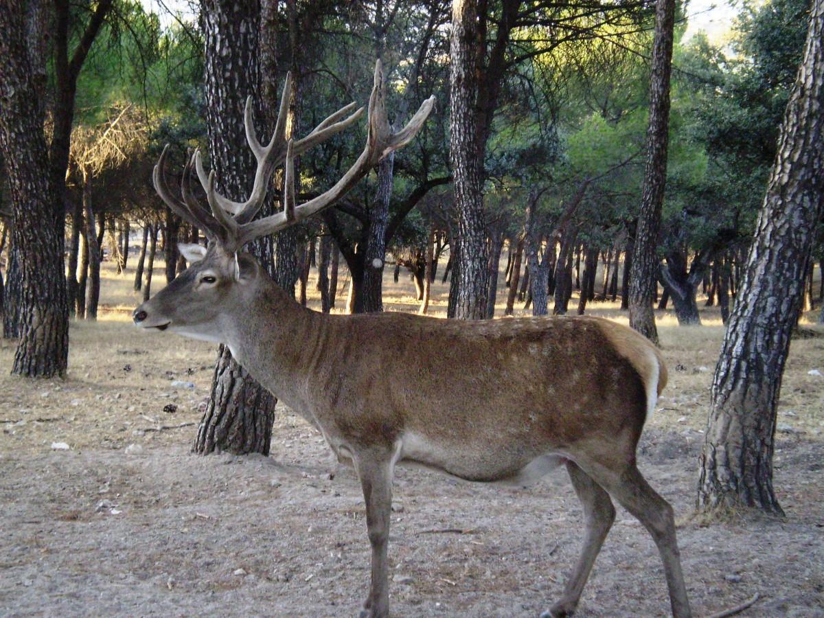 Los Montes de Toledo: El paraíso de los cazadores Posada de la Cal.